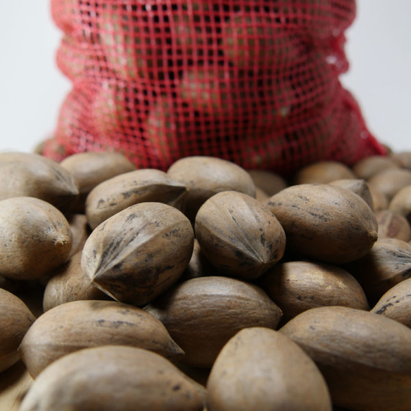 cape fear pecans in shell 3 or 5 lbs bags